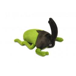 Nashorn Käfer