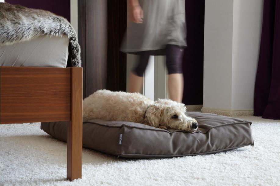 Hund auf MiaCara Schlafplatz