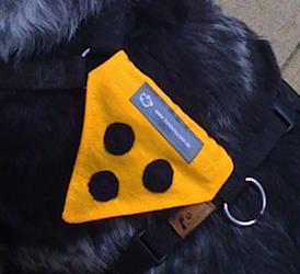 Hund mit gelben Blinden-Logo