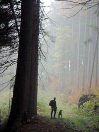Dogtrekking im Wald