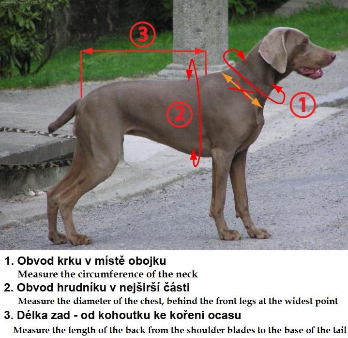 Hund richtig abmessen Faster Geschirr