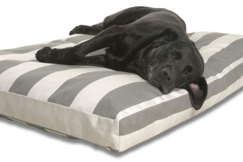 Viscoschaum Hundebetten orthopädisch