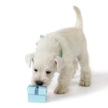 Versand Lieferung Haushund.at