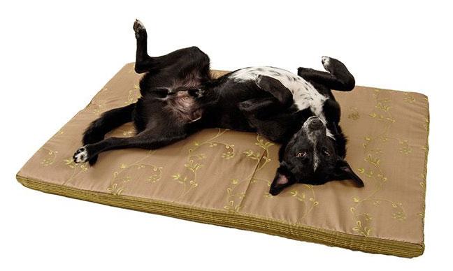 Jacob Traumhund Hundebetten