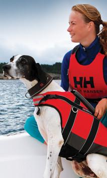 Hund mit Schwimmweste und Mensch